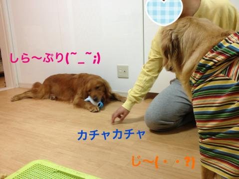 じーIMG_5393
