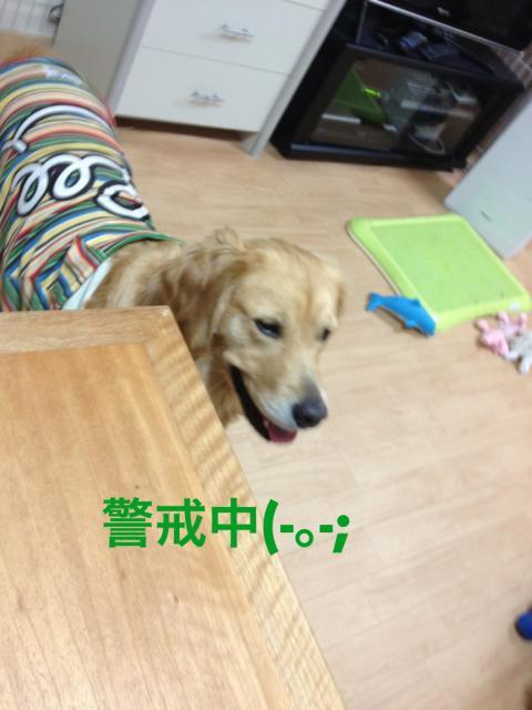 IMG_3329警戒中