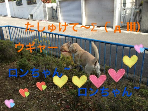 20121121232252647.jpg