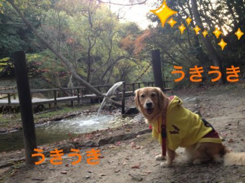 うきうきIMG_8232
