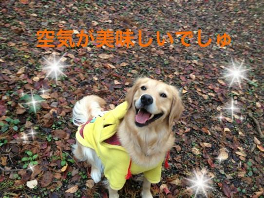 201211222246103a7.jpg