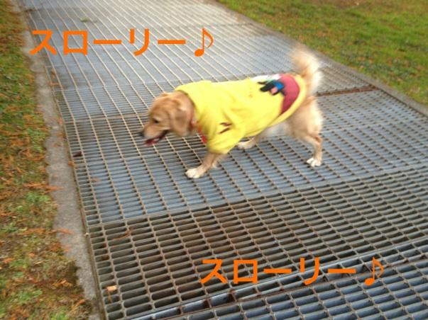 20121122224611522.jpg