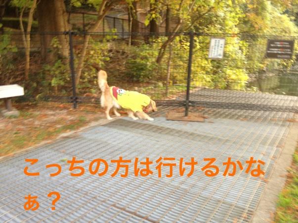 20121122224653544.jpg