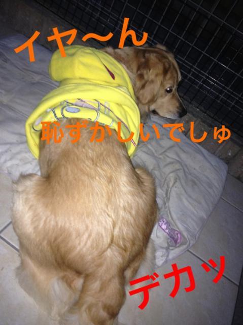 IMG_9788嫌~ン