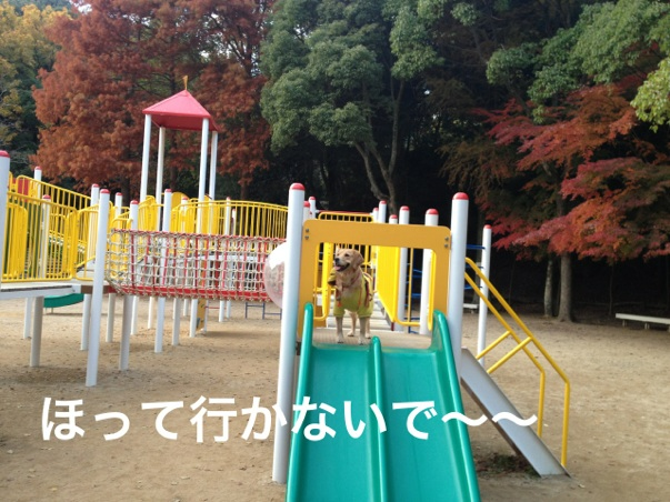20121123202943720.jpg