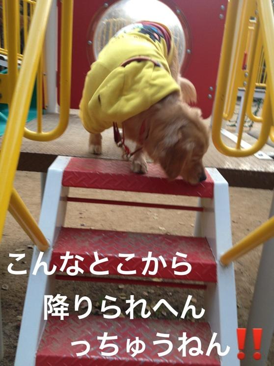 201211232029439d6.jpg