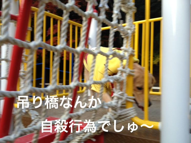 20121123203040e61.jpg