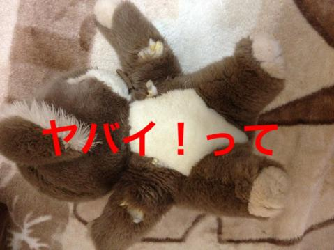 4IMG_0229コアラ