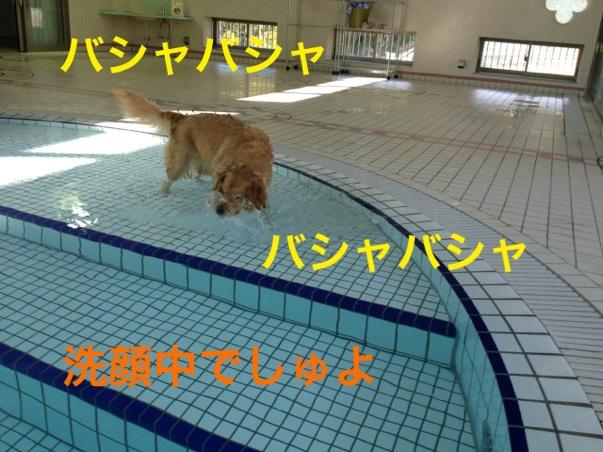 20121125215751146.jpg
