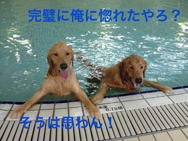 201211272142302f6.jpg