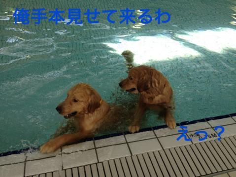 手本IMG_5040