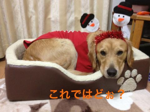 IMG_2220どお?