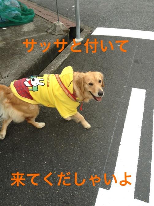 20121129214727bca.jpg