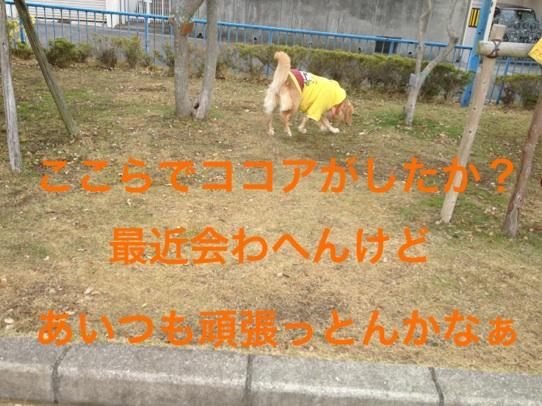 2012112921480261d.jpg