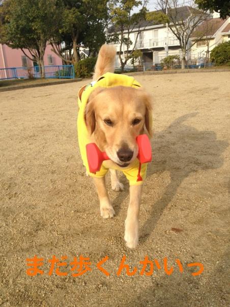 IMG_8892歩く
