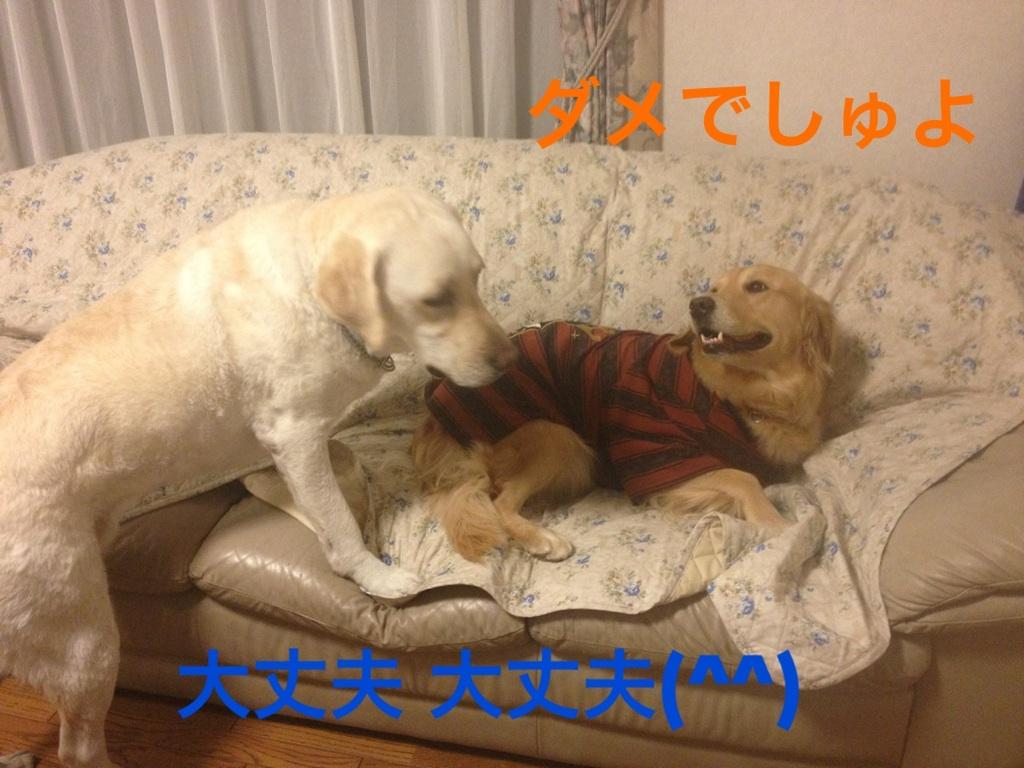 20121130230340673.jpg
