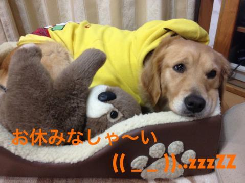 IMG_0405(=´ω`)ノおやすみだょぅ