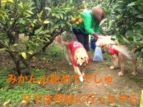 IMG_1563ママどこ