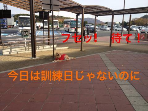 IMG_9150フセッ
