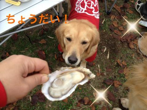 IMG_9355牡蠣いる