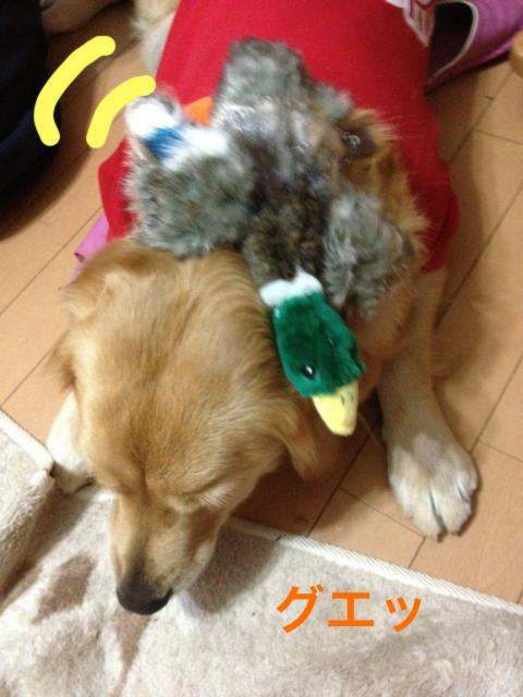 IMG_8012鴨