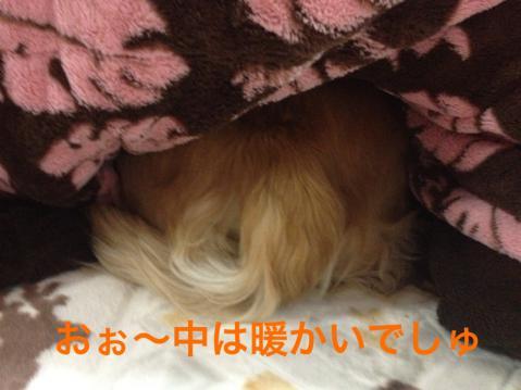 IMG_5409温かい