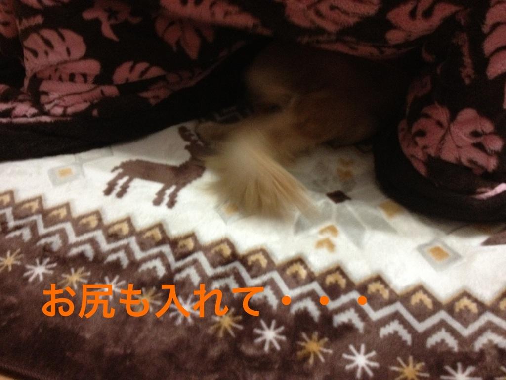 20121211201103e72.jpg