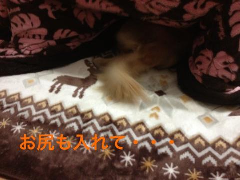 IMG_0672お尻