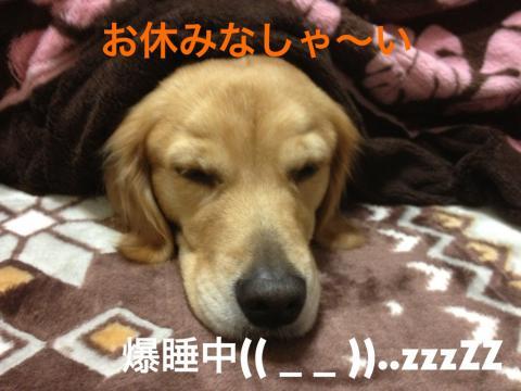 IMG_8515お休み