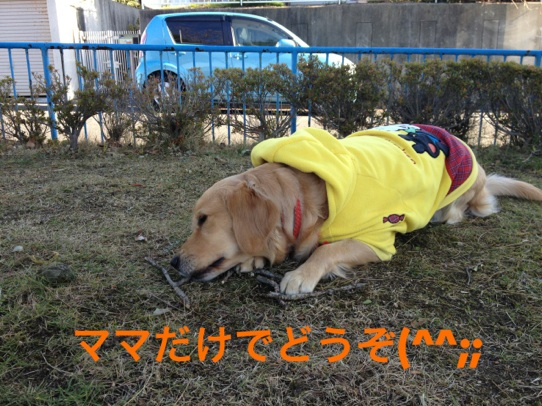 2012121323170552a.jpg