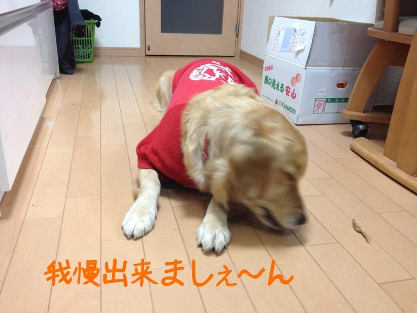 20121219213613dc3.jpg