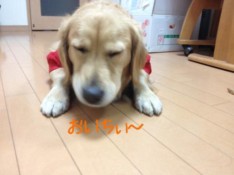IMG_8962おいちぃ