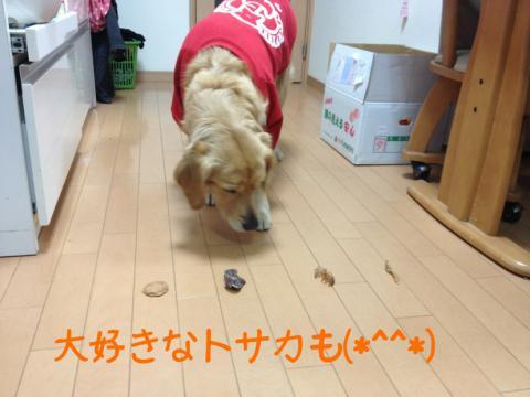 トサカIMG_0080