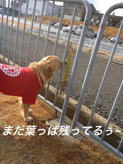 IMG_2374葉っぱ