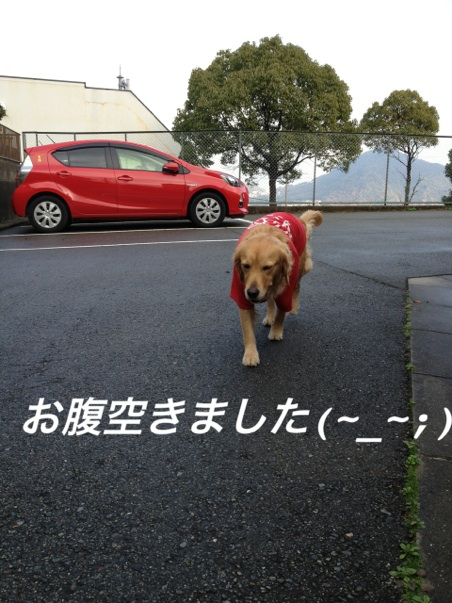 IMG_3009お腹