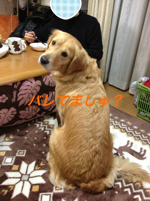 2012122823373733d.jpg