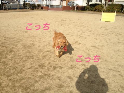 IMG_3913こっち
