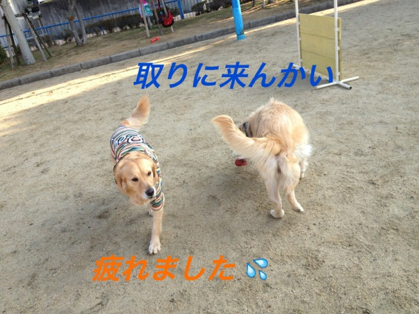 20130107222707af8.jpg