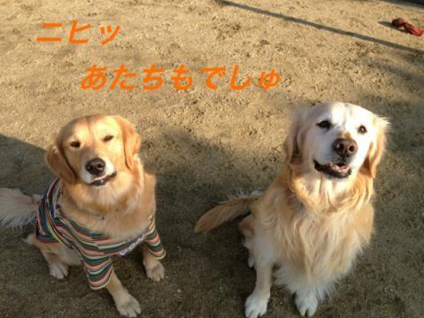 IMG_6896ニヒッ