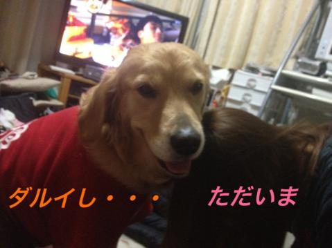 IMG_0510ダルいし
