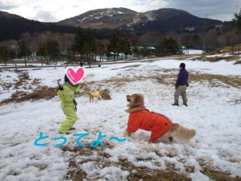 IMG_3737きなこちゃん