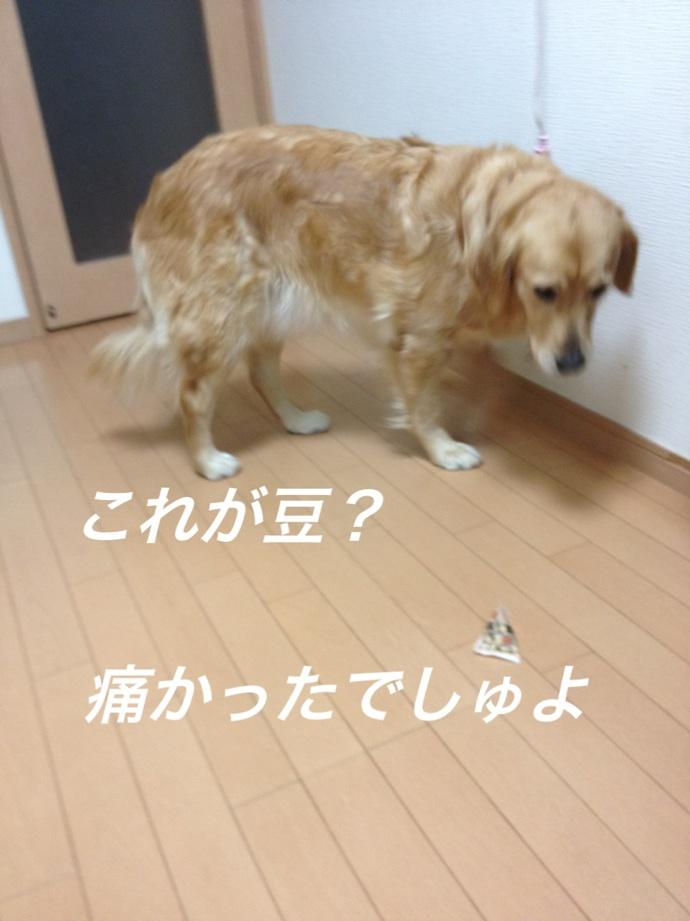 IMG_8688豆?