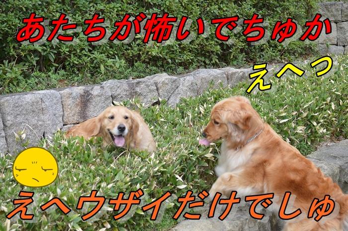 20130323221336792.jpg