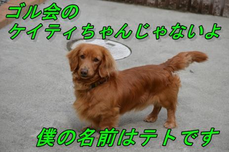 DSC_0153b