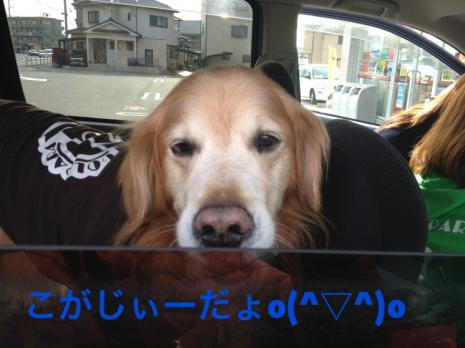 ぃぃIMG_3215こがじ