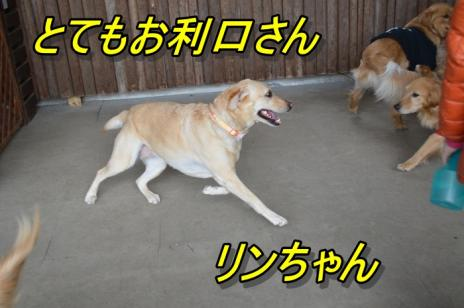 DSC_0387リン