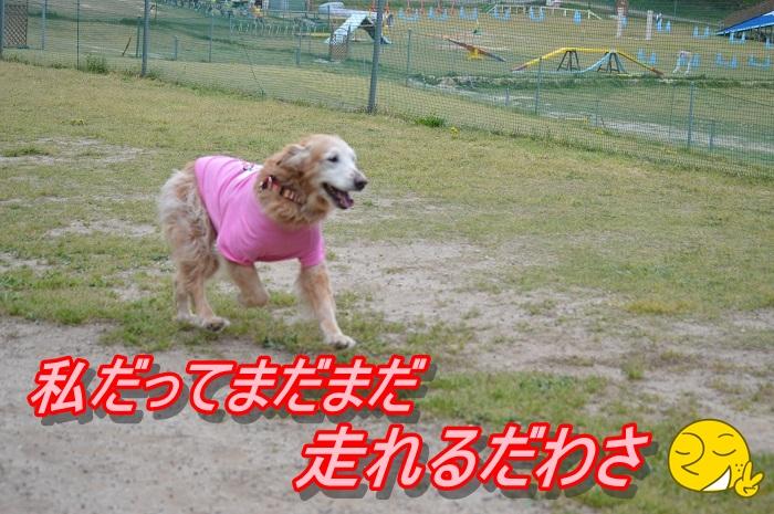 20130422234134c1f.jpg