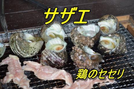 DSC_0055サザエ