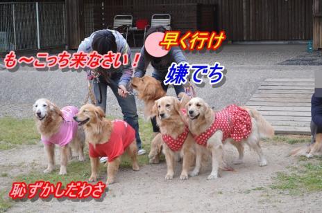 DSC_0370愛知