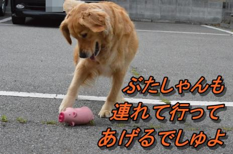 DSC_0001_20130610230734.jpg